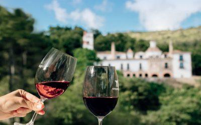 Tierra Bobal, tierra de vino desde hace 2.500 años